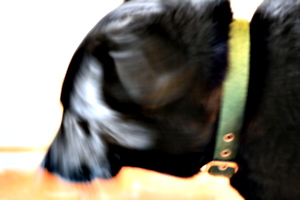 [picture: Black dog with motion blur!]