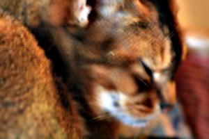 [picture: weird cat-fur effect]
