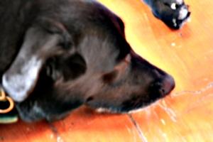 [picture: Reuben snout-down]