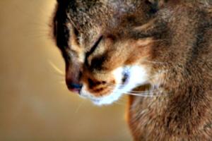[picture: blinking cat profilt]