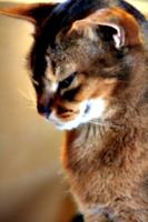 [picture: contented cat pose]