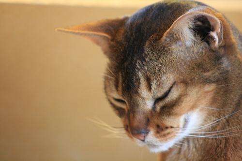 [Picture: Cat.]
