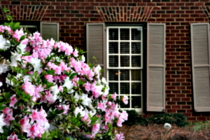 [picture: Window with shutters and flowers 1]