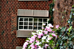 [picture: Window with shutters and flowers 2]