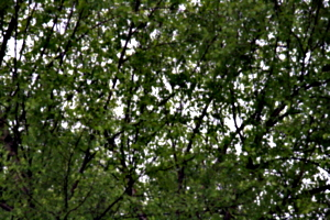 [picture: Tree Green 2]