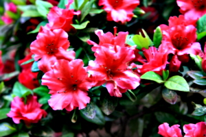 [picture: Flowers 1]