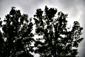 [picture: Trees with clouds]