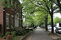 [Picture: Raleigh street with trees]