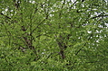 [Picture: Tree Green 1]