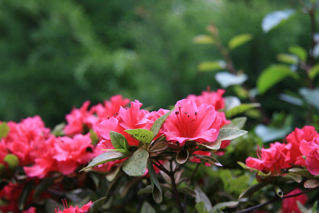 [Picture: Flowers 3]