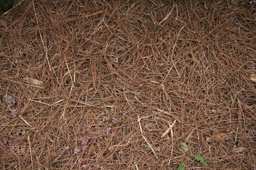 [Picture: straw texture]