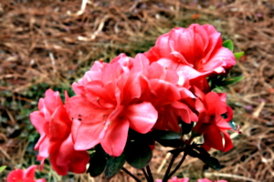 [Picture: Flower close-up 1]
