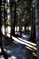 [picture: Path]