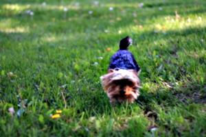 [picture: Doggie]