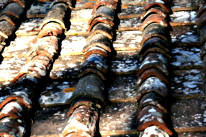 [picture: Roof tiles 1]