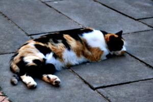[picture: Monastery Cat]