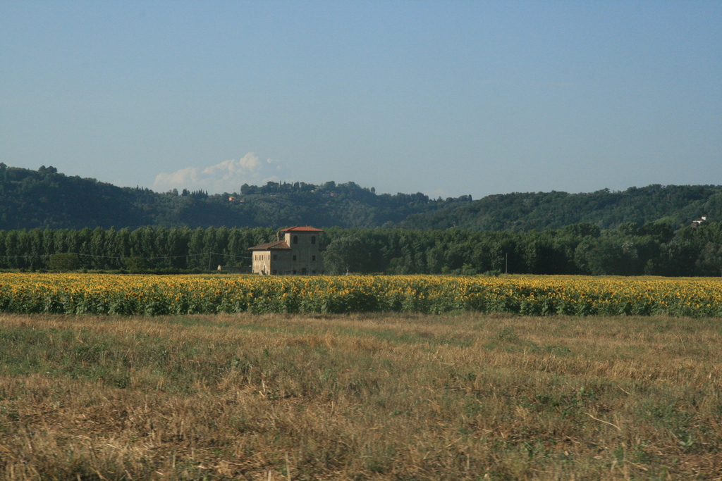[Picture: Tuscany Field]