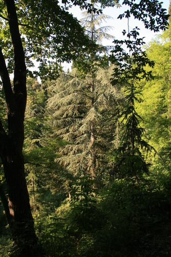 [Picture: Trees 2]