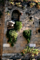 [picture: Jewish Cemetary 5: overgrown walls]