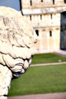 [picture: Lion 1]