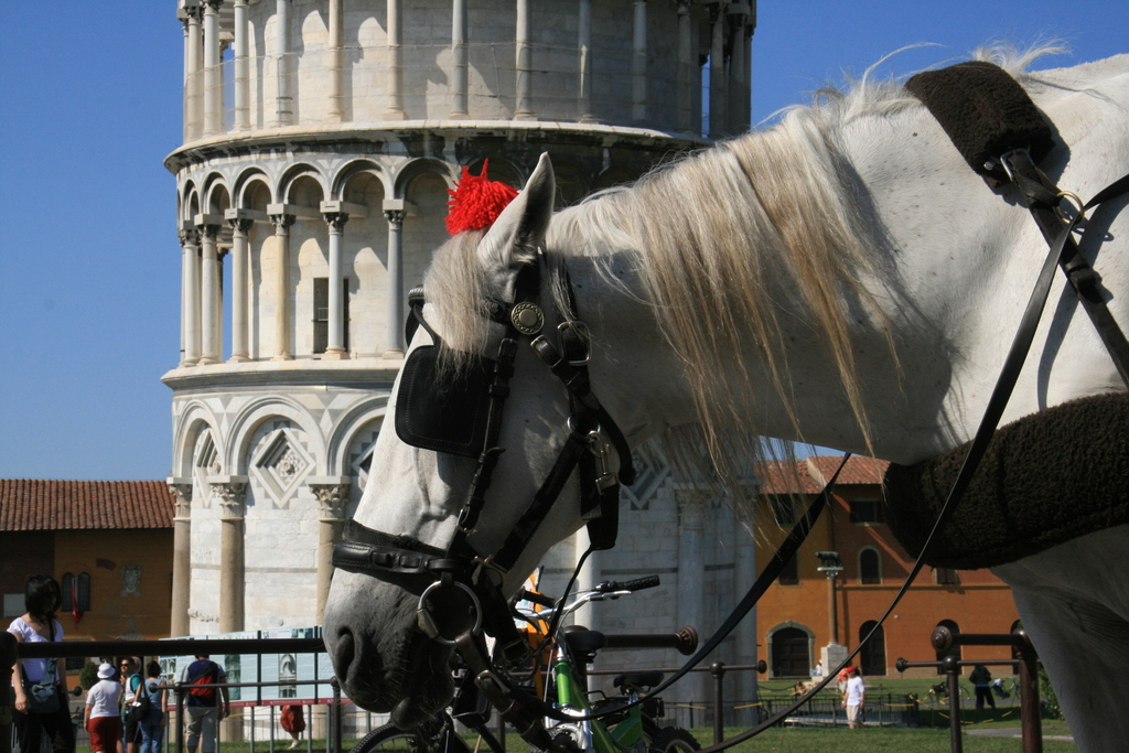 [Picture: Horse by the Leaning Tower of Pise]