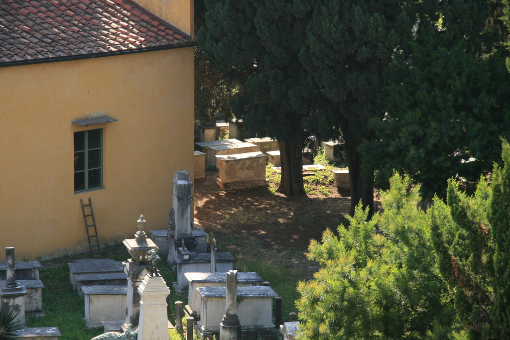 [Picture: Jewish Cemetary 25: Trees]