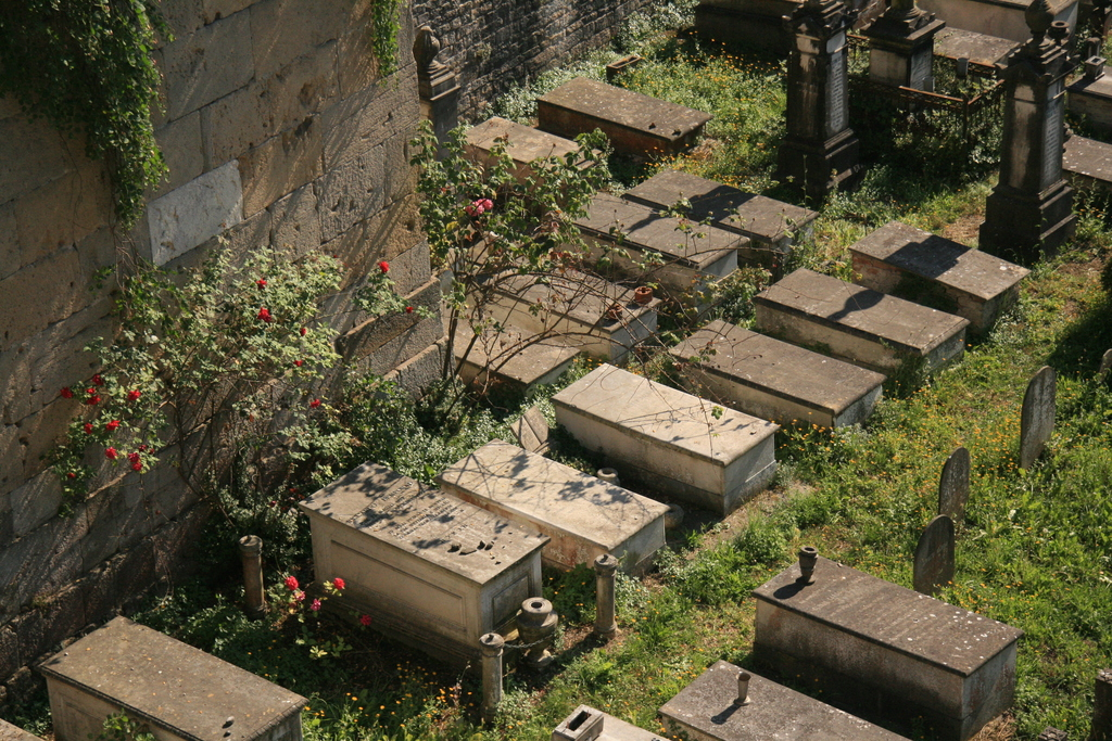 [Picture: Jewish Cemetary 28: Graves and Roses 2]