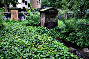 [picture: Overgrown Churchyard 2]