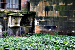 [picture: Wall-tomb with Ivy]
