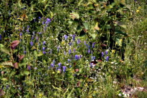 [picture: Wild flowers 1]