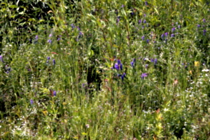 [picture: Wild flowers 6]