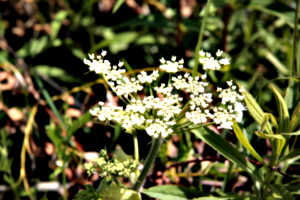 [picture: Wild flowers 7]