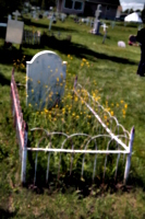 [picture: Overgrown grave]