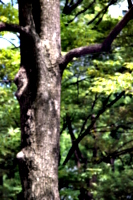[picture: tree trunk]