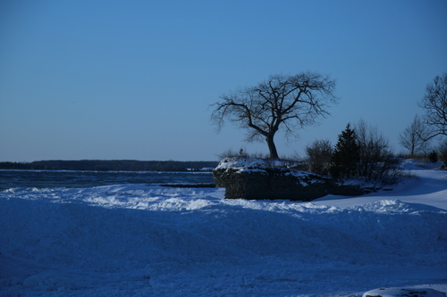 [Picture: Lonely tree]