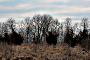[picture: Row of trees on the ridge]