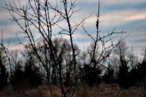 [picture: Thorn bush 2]