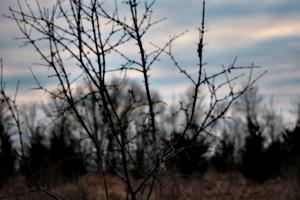[picture: Thorn bush 3]