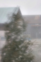 [picture: Moving tree, crouching building]