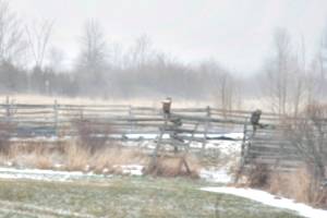[picture: Snow]