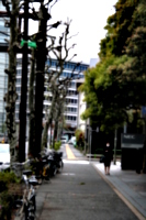 [picture: Trees lining side street]