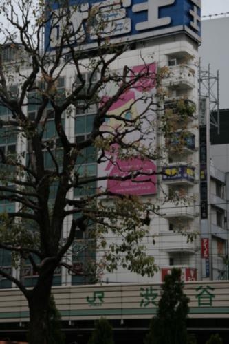 [Picture: Big square 9: Yen shop tree 2]