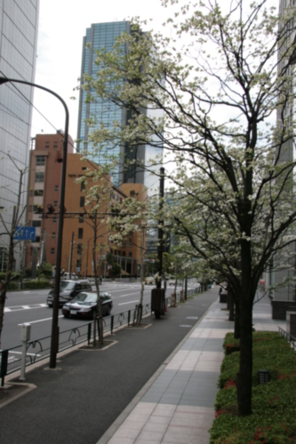 [Picture: Blossom 1]