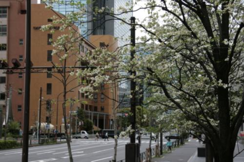[Picture: Blossom 2]