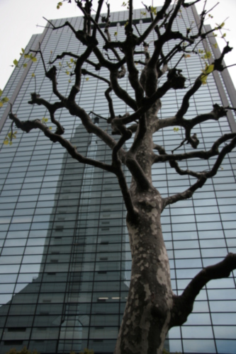 [Picture: Tree by tall tower]