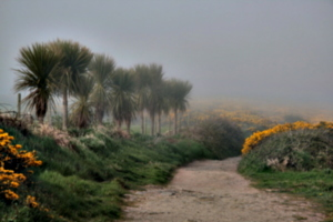 [picture: Path through the mist 3]