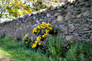 [picture: Flowers in an old stone wall 3]