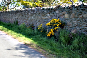[picture: Flowers in an old stone wall 4]