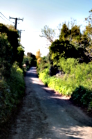 [picture: Country lane]