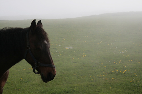 [Picture: Horse 4]